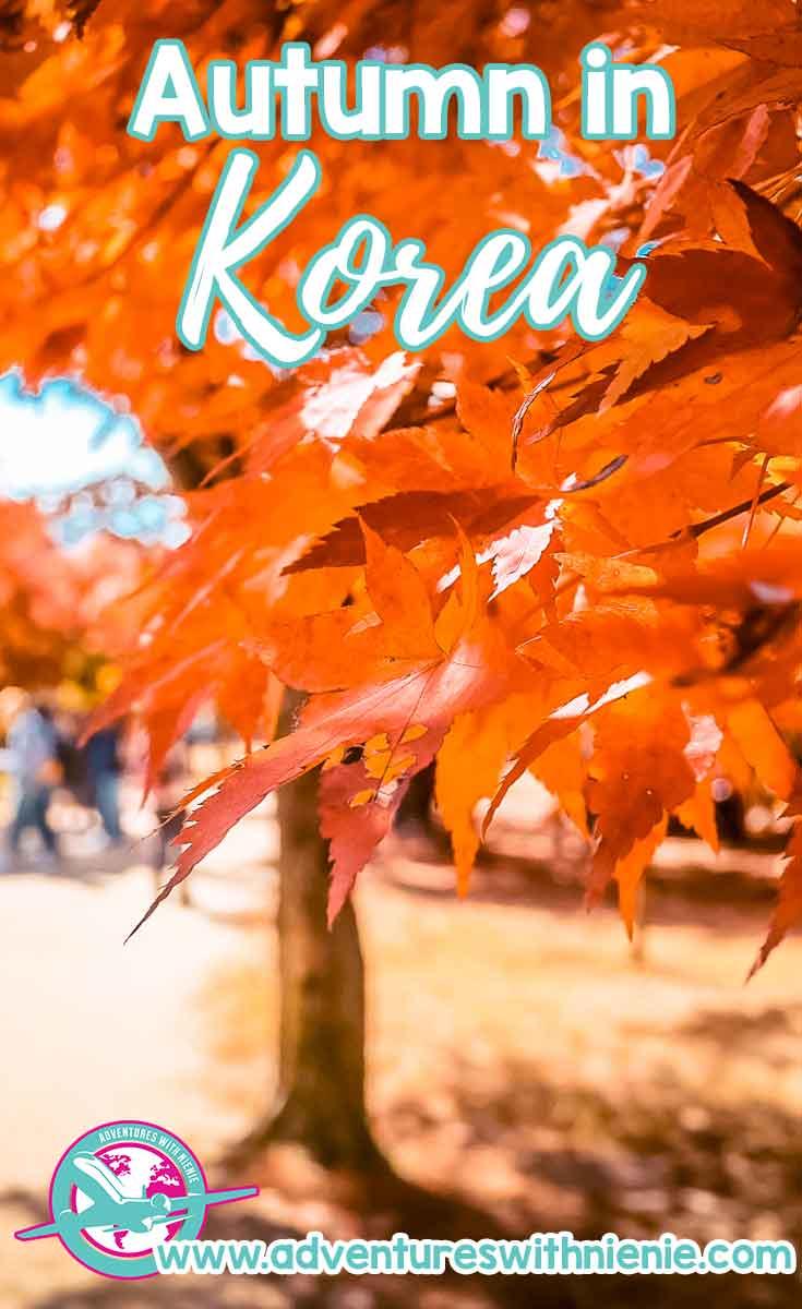 Autumn in Korea – 23 Amazing places to visit during Autumn
